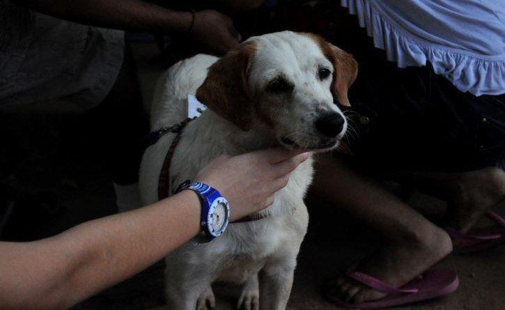 Se ofrece a donar su riñón para su perro haynoticia