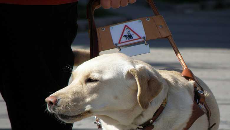 Un ciego aparece a 100kms de su casa llevado por su perro lazarillo