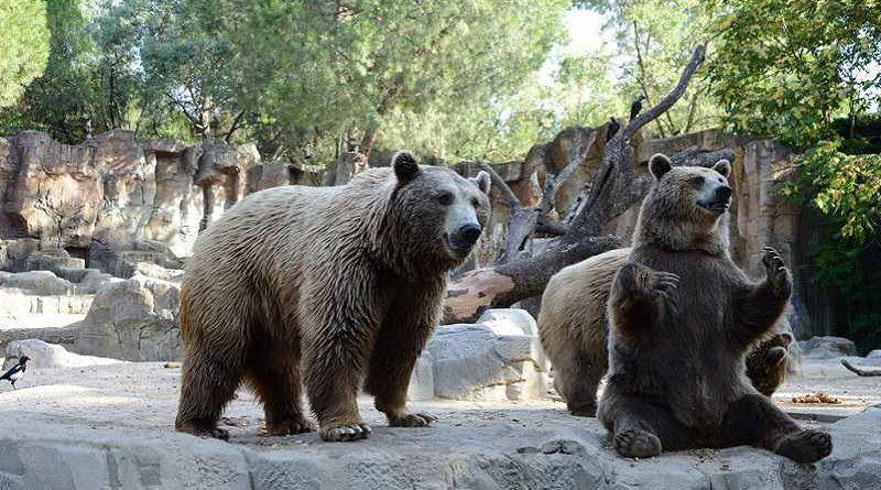 Atacado por osos en el zoo tras eructar ruidosamente