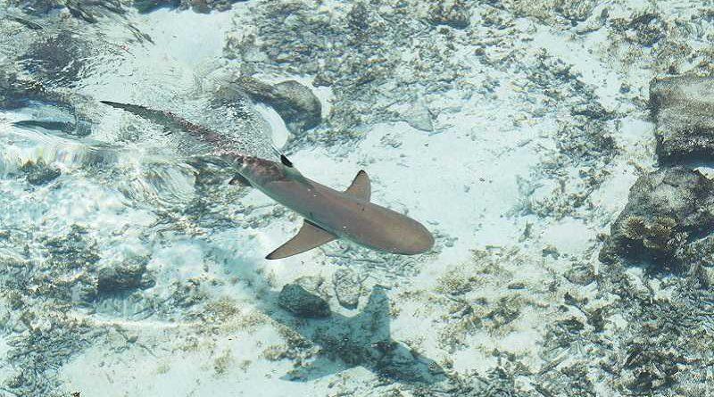 Consigue ahuyentar a un tiburón al cagarse encima de miedo