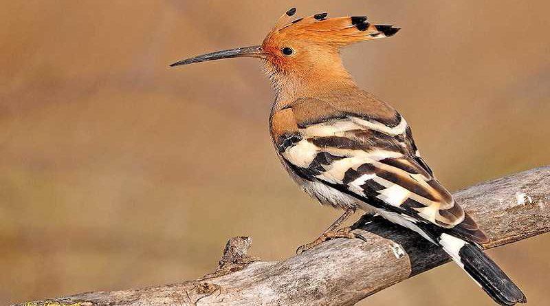 SEPRONA alerta de un pájaro que mete su pico en el culo de la gente