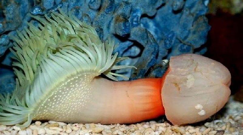 Tercer caso de embarazo por medusa en las costas españolas
