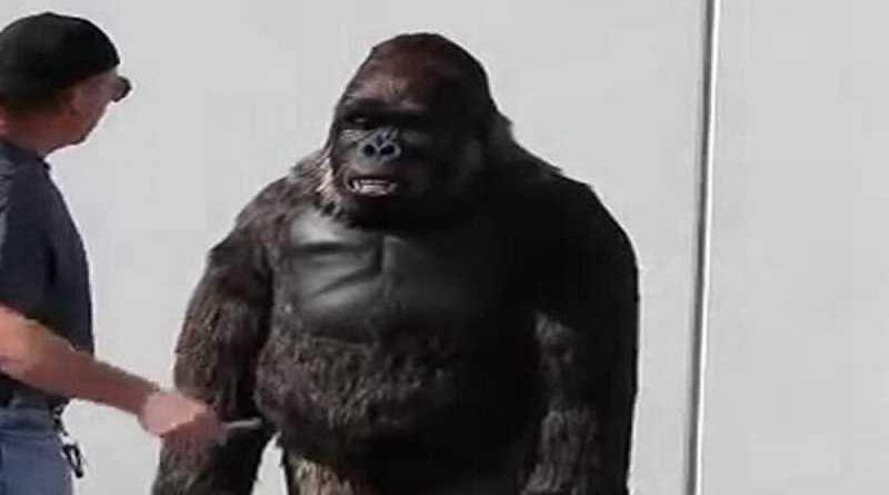 Se disfraza de gorila para su despedida de soltero y termina abatido por la policía