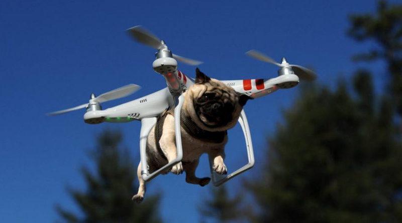 Denunciado por sacar a pasear el perro con el dron