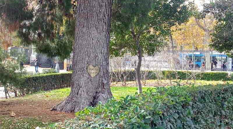 Le deja su novia y tala un árbol milenario en el que escribieron sus nombres