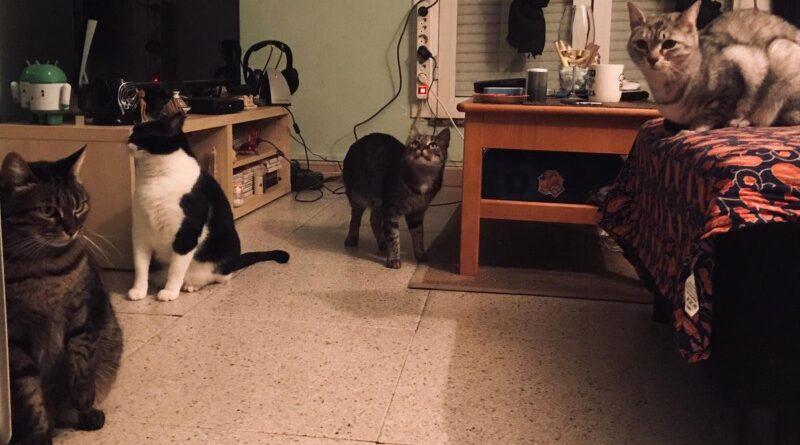 El Gobierno subvencionará a las personas que tengan más de 2 gatos en casa