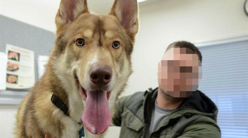 Un perro que habla causa el pánico y resulta que se había tragado un altavoz Alexa