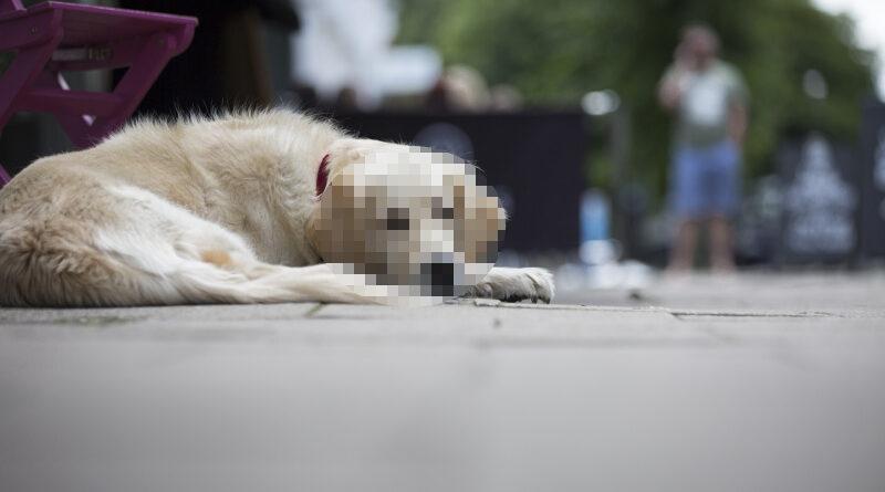 Un perro lleva 10 días esperando a su difunto dueño a la puerta del puticlub