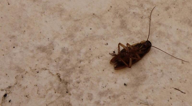 Denuncian a un veterinario por negarse a curar a una cucaracha envenenada