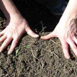 Un agricultor hace agujeros con el pene en la tierra porque asegura que así es más fértil la cosecha