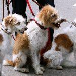 El gobierno cobrará un impuesto por tener mascota
