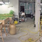 Detenido por tener una plantación de marihuana en su casa que resultó ser de tomates