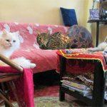 Anciana lleva 6 años cuidando un lince pensando que es otro de sus gatos