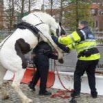 Un policía ingresado tras ser agredido por un caballo en una cabalgata